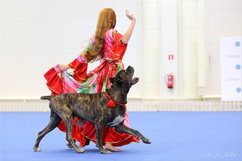 период миграции танцы с собаками картинки которое полезно