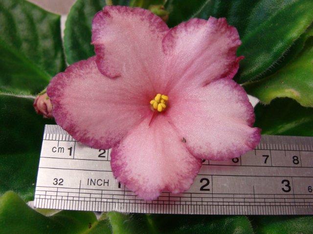 Мои цветочки - Страница 13 927bec7efa10