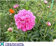 Лето в наших садах - Страница 2 2af1a708d731t