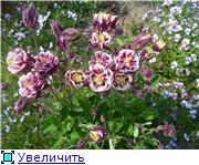 Лето в наших садах - Страница 9 453fdbff5159t