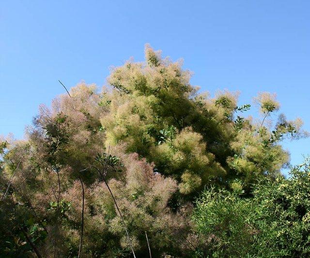 Экскурсия по Ботаническому Саду 112a6c12838f