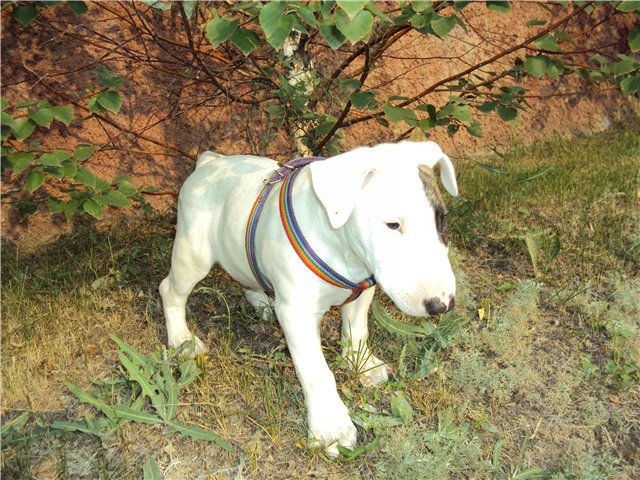 Собака-праздник! Сегодня и каждый день на арене Жоринька!!! C629387f60d4