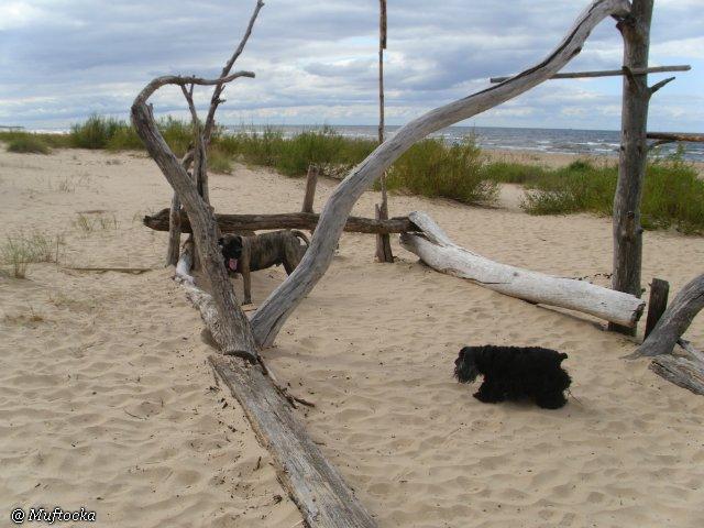 Наши собаки, друзья и гости, кот Мензурка 4bc2d7acda1c