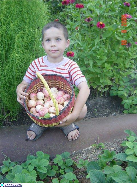 Яблоня: сорта и агротехника. - Страница 3 4eb841be706at