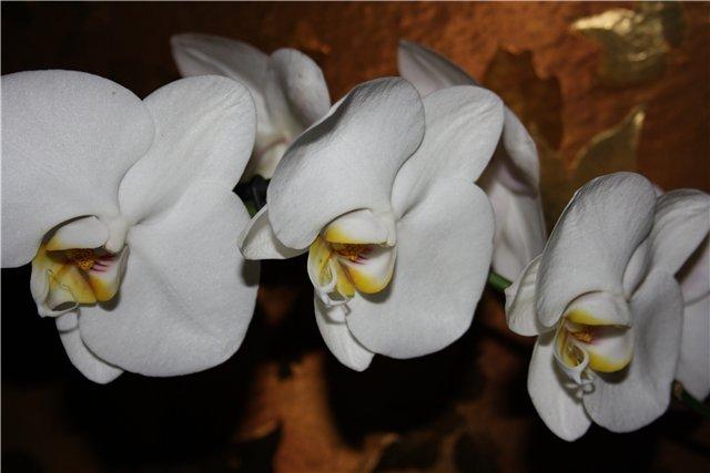 Растения от FILIGERa - Страница 3 586bb40b0ec6