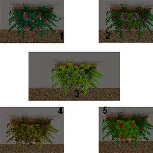 Цветы для дома 445cfe99a730