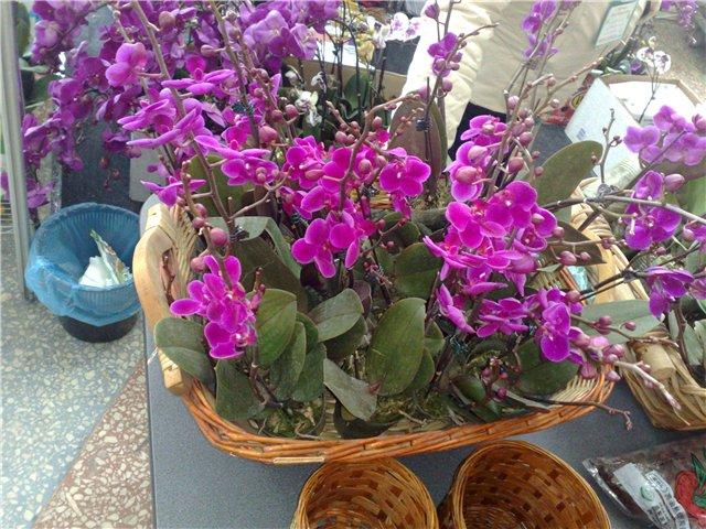 «Цветы.Ландшафт и Приусадебное хозяйство Весна - 2010» 7610f0e53783