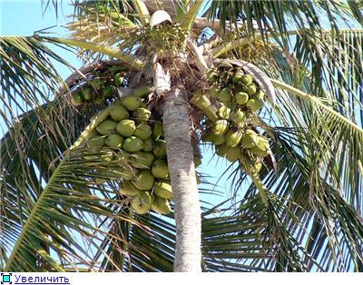 Привет из Доминиканы 66b882475042t