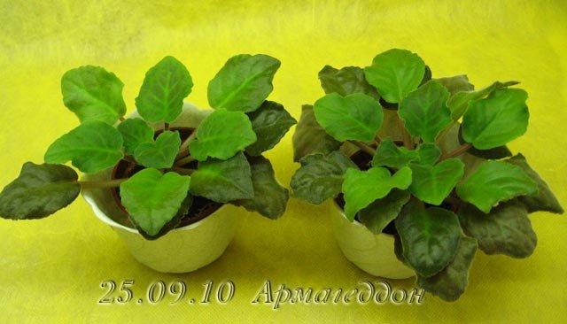 Цветение к Н. Г. (Olga-flora) 636ebddd5d83