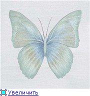 Животные, птицы и насекомые 2b59161047a3t
