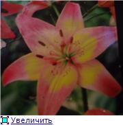 Горшечные лилии 69bad9341f54t