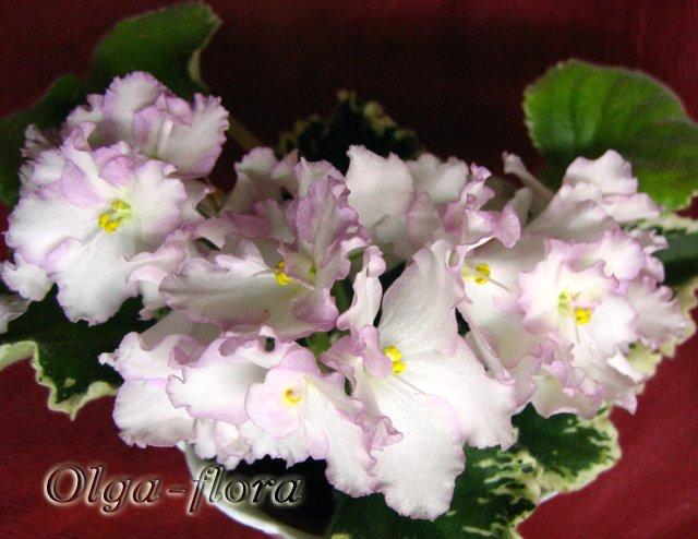 Enchanted April (S. Sorano)  - Страница 2 7440270062ba
