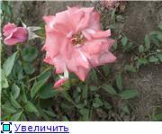 Розы от Naka-Noka 38d19998b9c6t