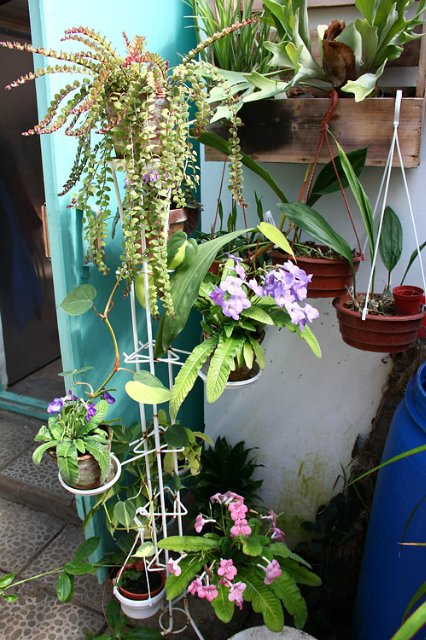 Экскурсия по Ботаническому Саду 7d31079ab901