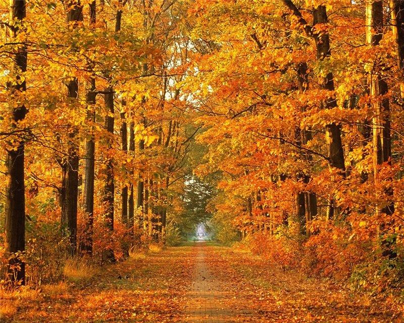 ბუნების ლამაზი ფოტოები 8aad52f87e19