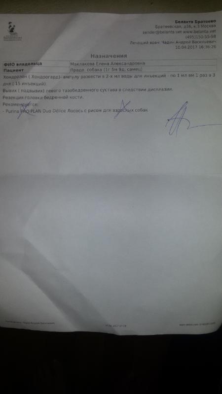Москва, Прадо, английский бульдог, 7 ноября 2015г - Страница 2 C3749a073209