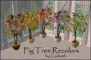 Цветы для дома - Страница 6 3d9c988f9497