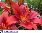 Наши цветочки 5802028aeef1t