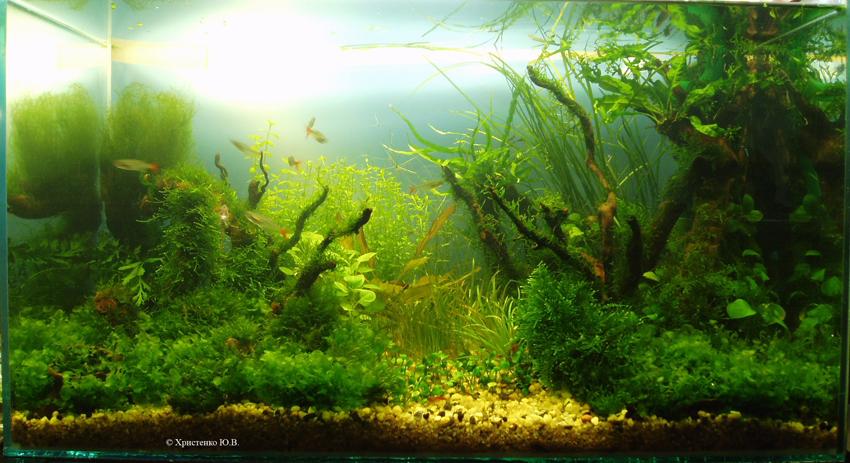 """Как родился аквариум """"Луч света"""" 1af91cb9f582"""
