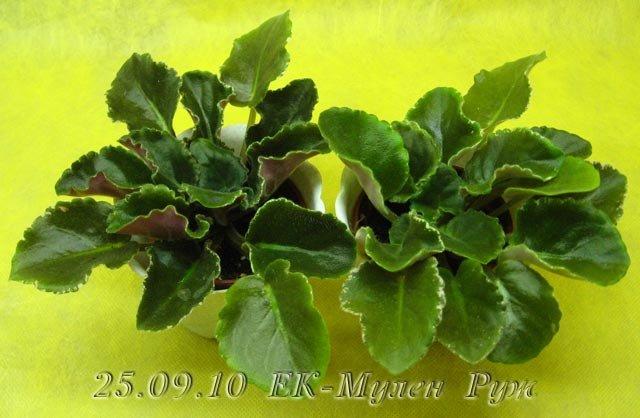 Цветение к Н. Г. (Olga-flora) 3a1aaf085c79