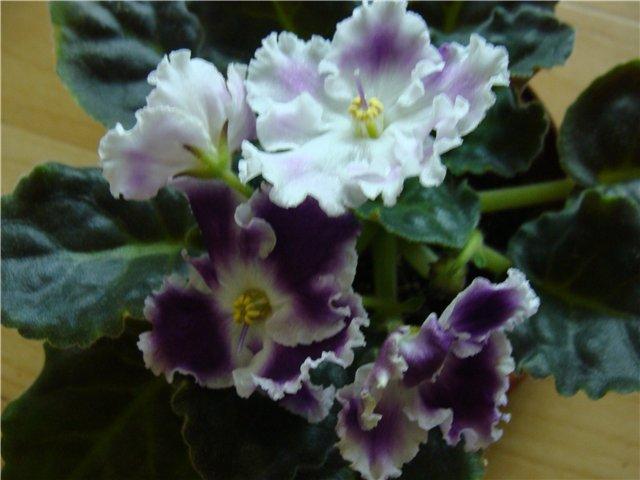 Весеннее  цветение (Хваст от Веры) - Страница 6 91878ac0038c
