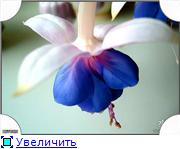 ФУКСИИ В ХАБАРОВСКЕ  - Страница 3 07843a3de807t