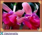 ФУКСИИ В ХАБАРОВСКЕ  - Страница 2 07b54fbf1480t