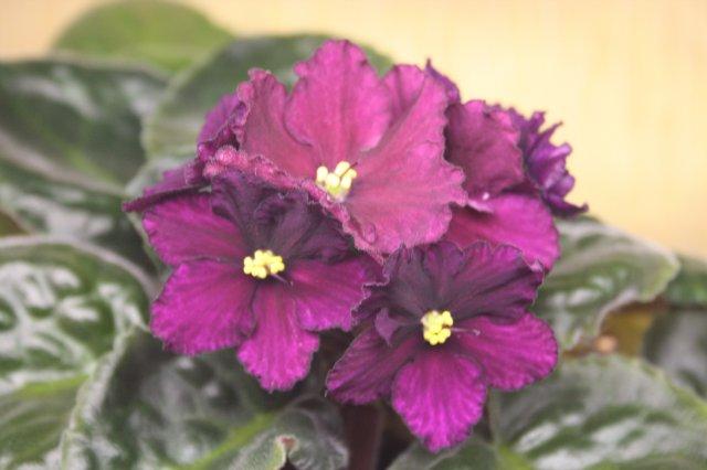 Растения от FILIGERa - Страница 12 Ab2572f8c507