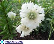 Лето в наших садах - Страница 7 42ee0b58bf1dt