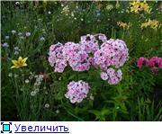 Лето в наших садах - Страница 8 A7e51c749db8t