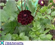 Лето в наших садах - Страница 5 9768b40c1936t