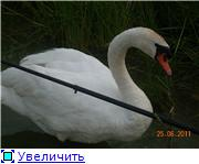 Птичий двор D446ce53d39bt