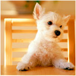 Аватары с животными - Страница 2 9d935a8d2d19