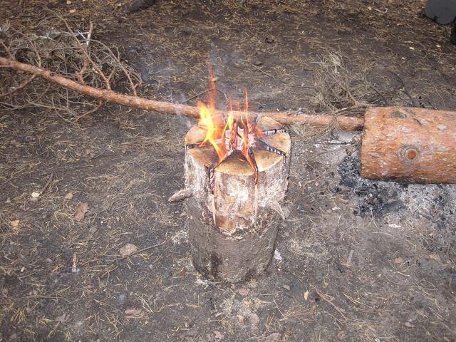 За грибами в Конаково (Тверская область, Волга)! F14672fbcd3f