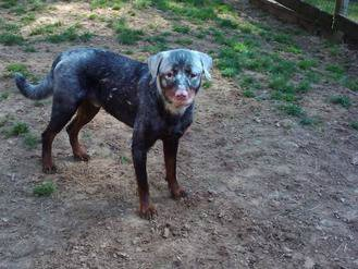 Витилиго у собак C60225f6bb3b