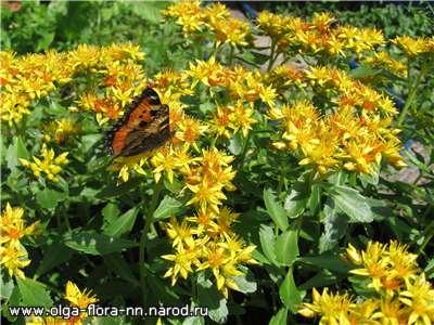 Многолетние растения 21543e864d86