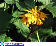 Растения для тени или Тенистый сад. 4830d766175dt
