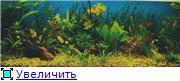 Мои аквариумы. Abe0728ac6d8t