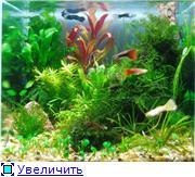 Мои аквариумы. 9928ea89ac41t