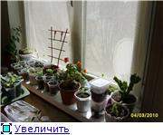 Бальзамин-уход, выращивание, размножение - Страница 2 F178ef7548d5t