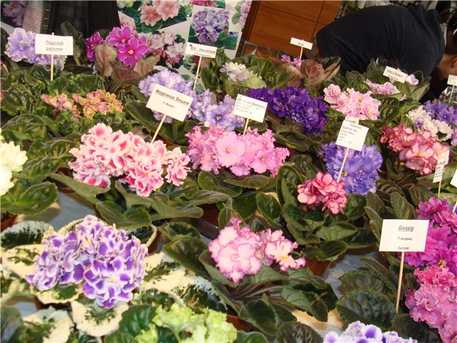 Международая выставка «Цветы.Ландшафт .Усадьба 2010» Астана - Страница 2 F311d41fd5ea