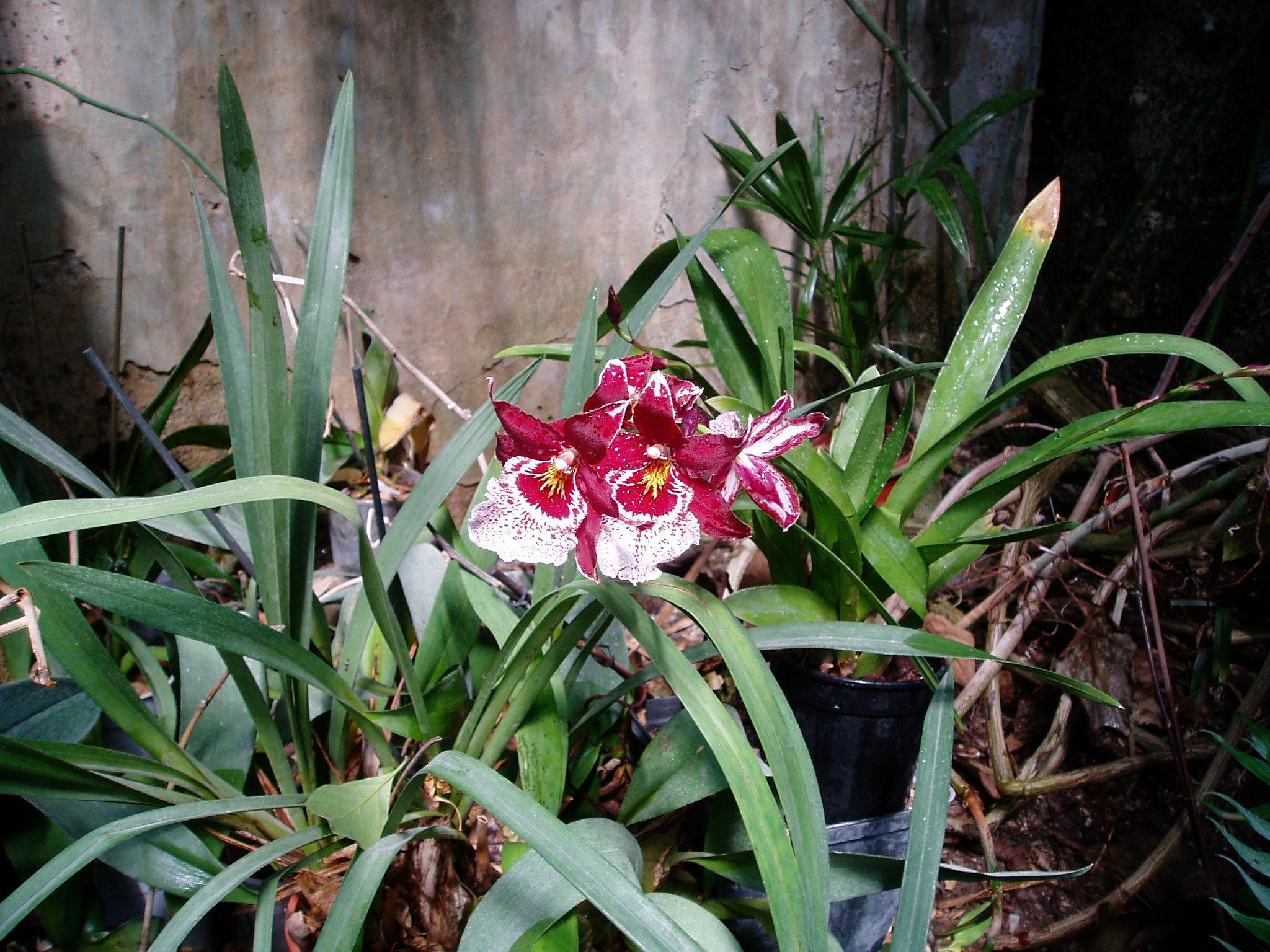 Выставка Орхидей Bd5c3476e86e