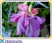 ФУКСИИ В ХАБАРОВСКЕ  - Страница 2 2b0e6b77edaet