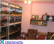 Геснеривые (фиалки, глоксинии, стрептокарпусы, и.т.д.)  1558f9ba8666t