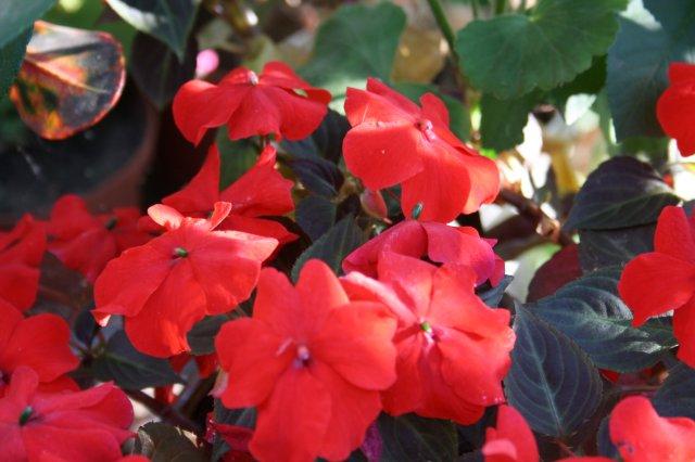 Растения от FILIGERa - Страница 3 79490134e80a