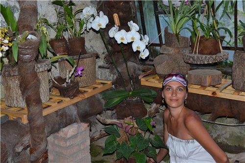 Выставка орхидей Никитского ботанического сада 3bf60d938f59