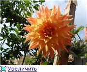 Георгины в цвету - Страница 2 67e755e1c166t