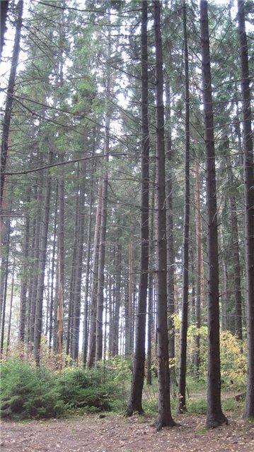 За грибами в Конаково (Тверская область, Волга)! 63a4eb091bbc
