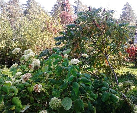 Осень, осень ... как ты хороша...( наше фотонастроение) - Страница 4 054844c9315b