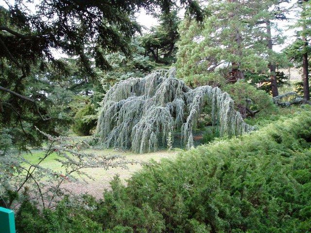 Парад хризантем в Никитском ботаническом саду. Крым  44c4e633d9ae